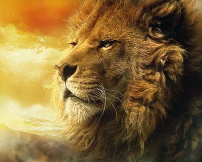 Lion Aslan (12-18-12)