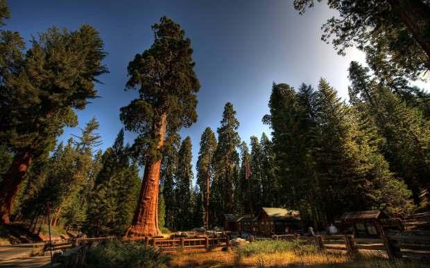 Redwoods (11-5-13)