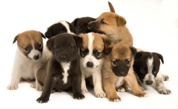 Puppies (3-10-15)