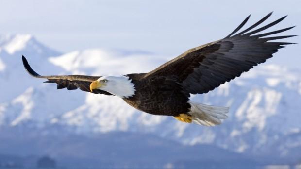 soaring-eagle (3-23-15)