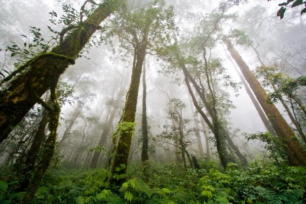 rainforest (8-18-15)
