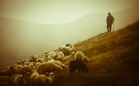 Shepherd (9-3-15)