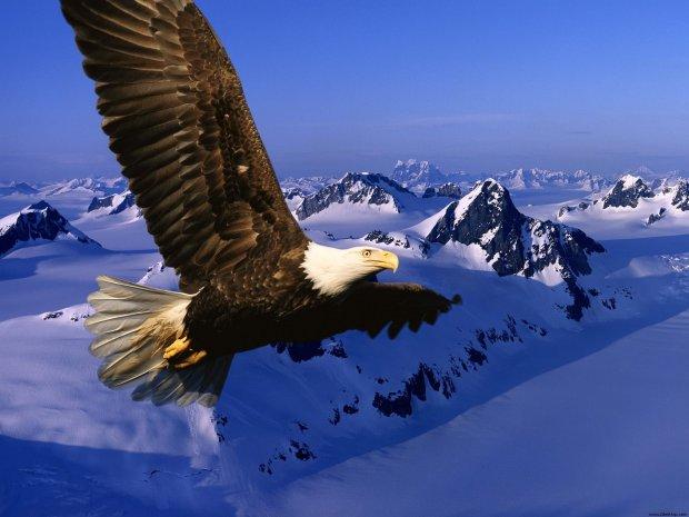 soaring-eagle (2-8-16)