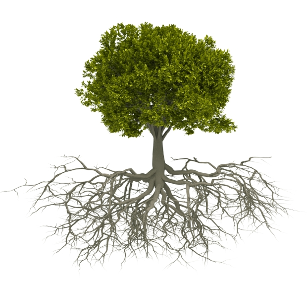 deep roots (6-6-16)