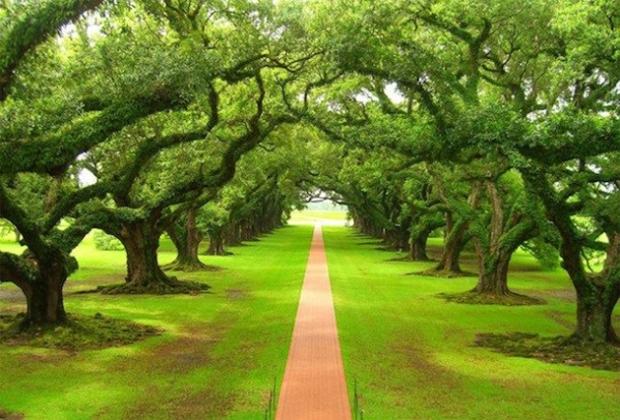nature 2 (7-11-16)