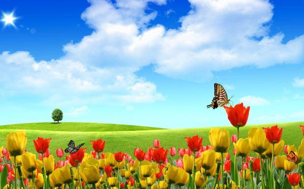 spring (3-21-17)