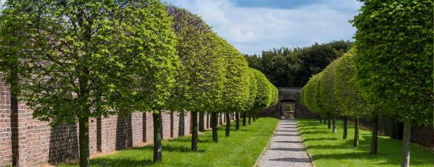 mature trees 2 (6-25-17)