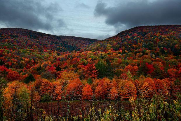 fall (10-17-17)