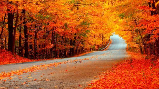 fall colors 2 (10-27-17)