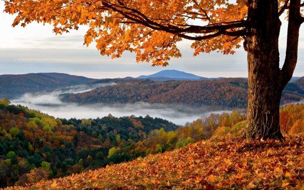 fall 2 (11-16-17)