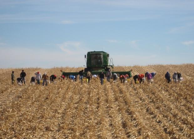 harvest 2 (6-14-18)