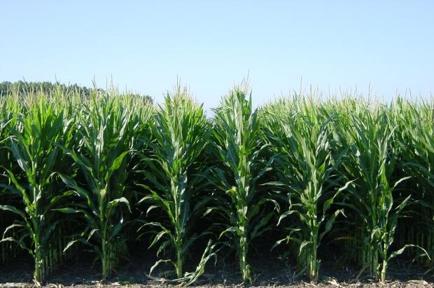harvest 4 (6-14-18)