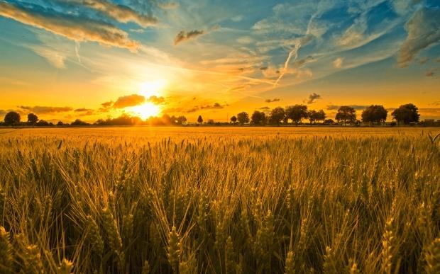 harvest (6-14-18)