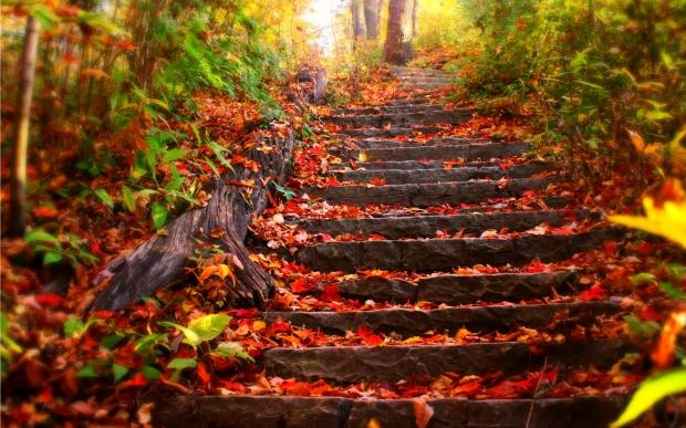 fall 2 (9.19.18)