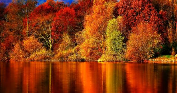 fall (9.19.18)