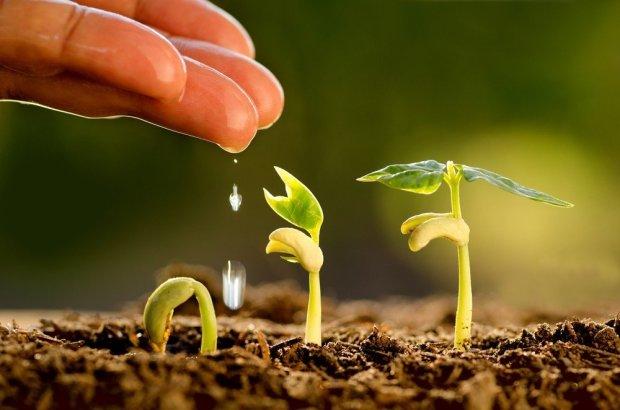 plant 2 (9.23.18)