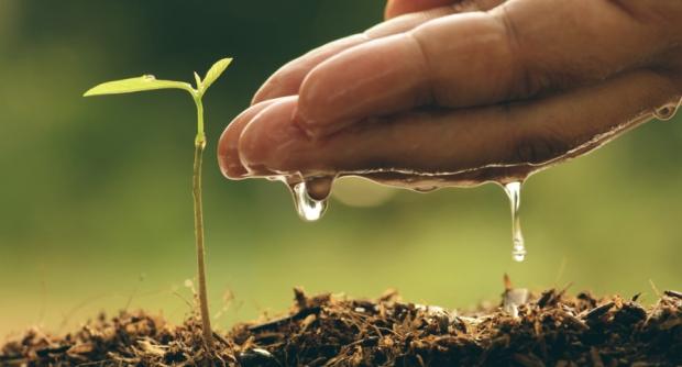 plant (9.23.18)