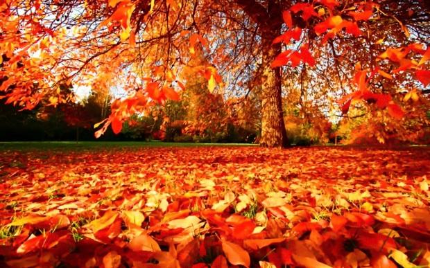 fall (10.24.18)
