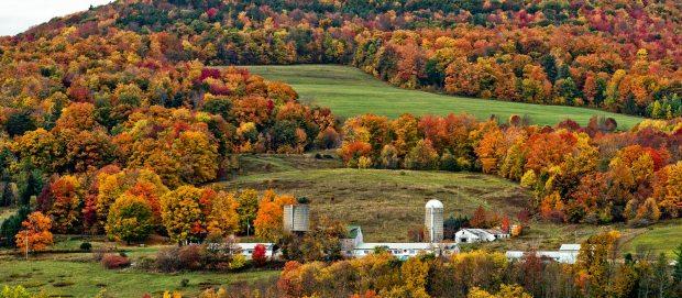 fall (10-25-18)