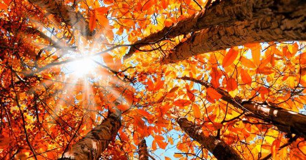 fall 2 (10.24.18)