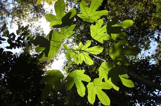 leaves (10.29.18)